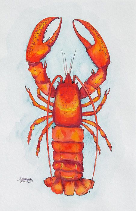 Red Lobster Watercolor Art Print