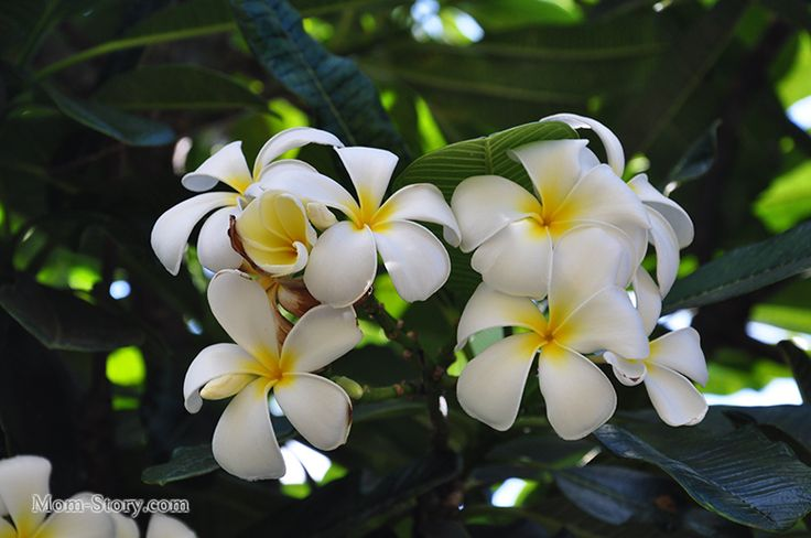 10 дней в раю. Наш отдых на Гавайях (остров Мауи)