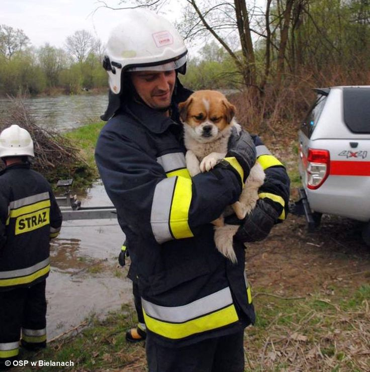 Strażacy uratowali psiaka #Bielany #pies #straż #strażacy #ewakuacja #most