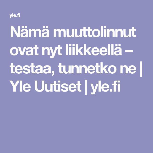 Nämä muuttolinnut ovat nyt liikkeellä – testaa, tunnetko ne | Yle Uutiset | yle.fi