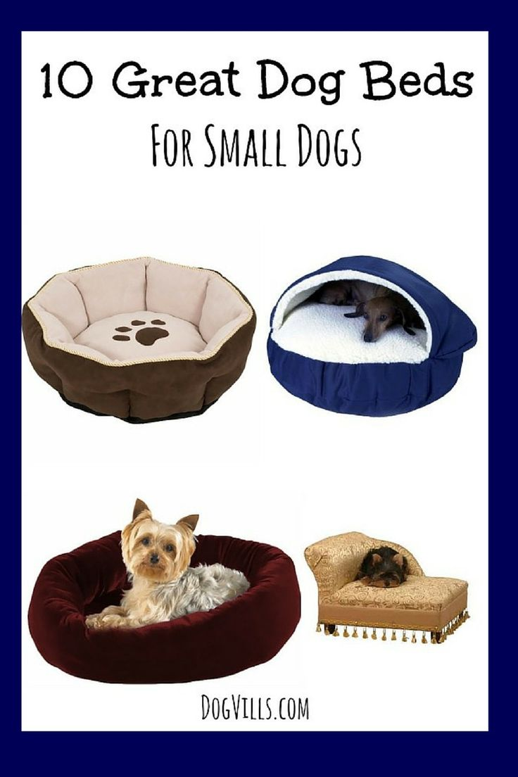 Give your little pooch a comfy place to sleep with these fantastic dog beds for small dogs!