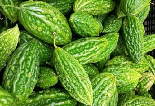 Did you understand that bitter gourd or karela is not actually a veggie however a fruit? The part of the plant that is used for usage and for various medicinal functions is the fruit of the bitter squash. Bitter gourd juice contains a train of crucial nutrients ranging from iron, magnesium and vitamin to potassium …