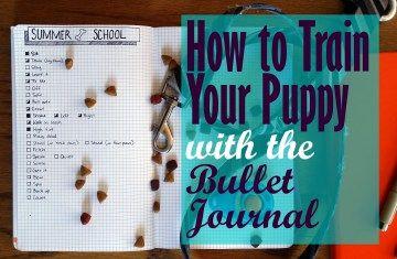 Come addestrare il vostro cucciolo con il Bullet Journal |  Littlecoffeefox.com
