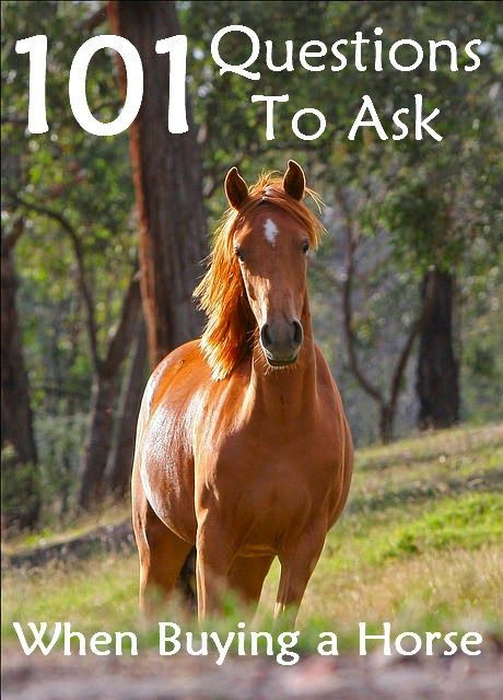 Horse shopping can be daunting, and weeding out the good from the bad is sometimes a difficult task. If there's one thing I've learned over the years it's the more you ask, the more you know!