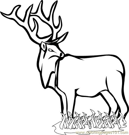 coloring pages animals coloring pages zoo animal coloring page 001 32 cartoons