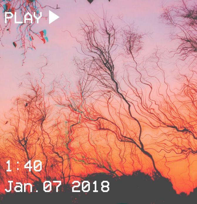 M O O N V E I N S 1 0 1 #vhs #aesthetic #trees #sunset #orange #pink #sqiggly