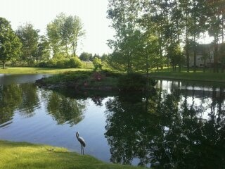 17 Best Farm Pond Images On Pinterest Backyard Ponds 400 x 300