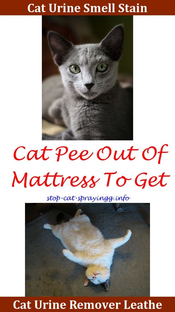 Best Way To Get Old Cat Urine Out Of Carpet Www Resnooze Com