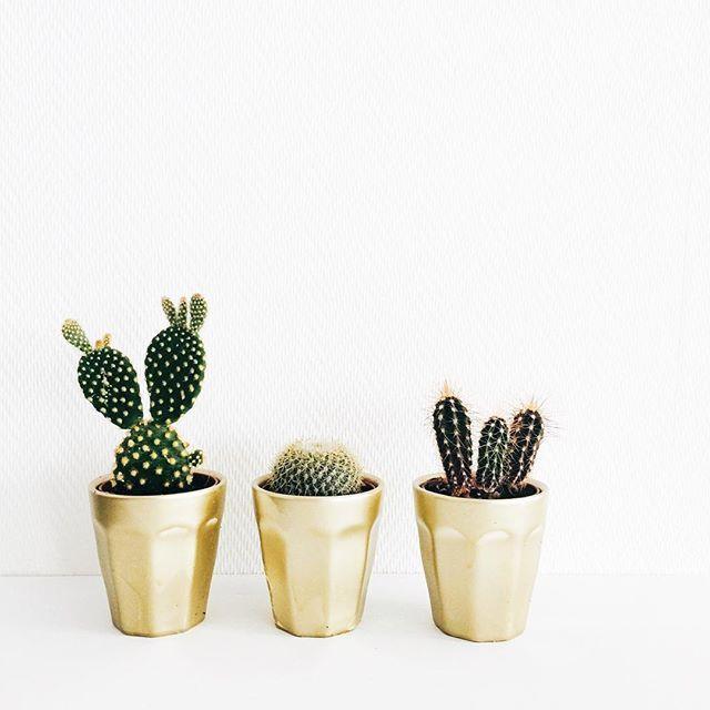 De HEMA mini mokken zijn ook heel geschikt om mee te DIY'en. Onze cactusjes passen er perfect in. #HEMAwonen #DIY #cactus