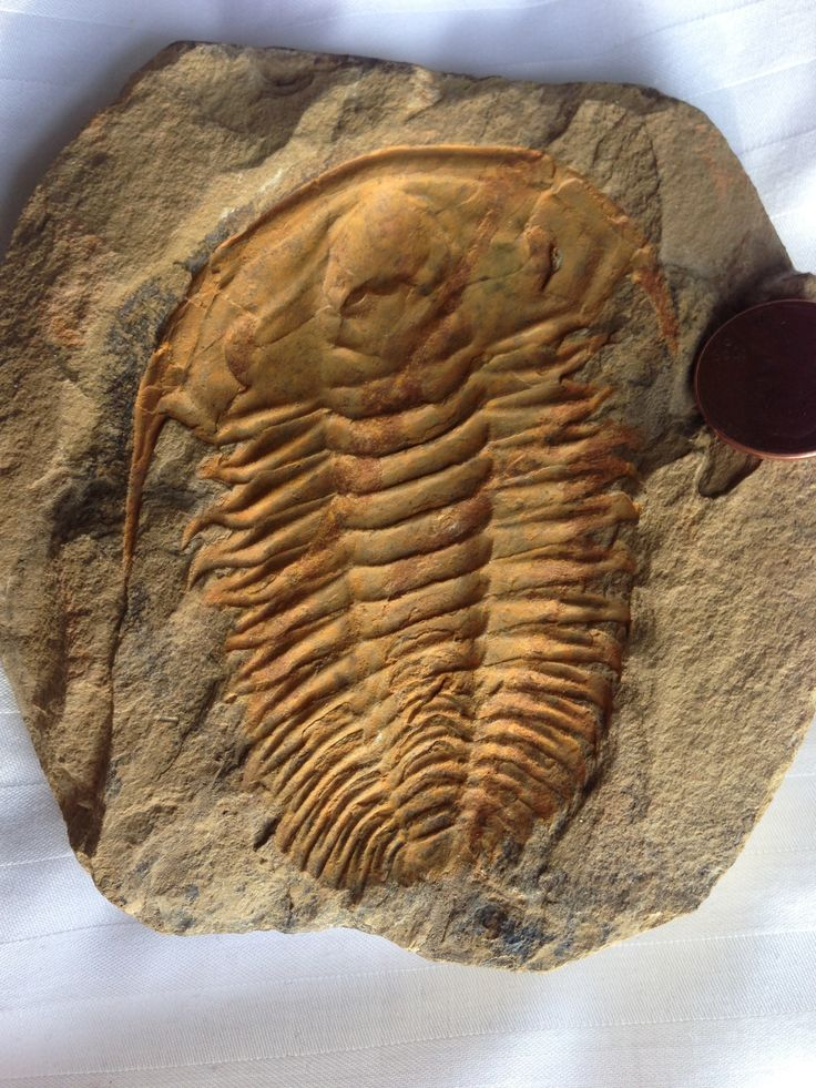 Image result for A new technology helps to study the trilobites in 3D