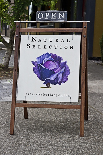 Natural Selection: Restaurant name, Branding and Identity design /