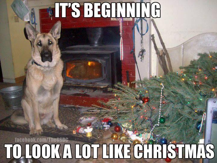 Dog Christmas Meme.Christmas Tree Dog Meme Merry Christmas And Happy New Year
