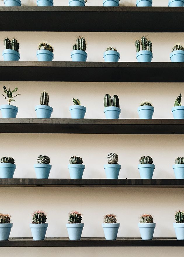 Blue pots Cactus   Wall decor DIY