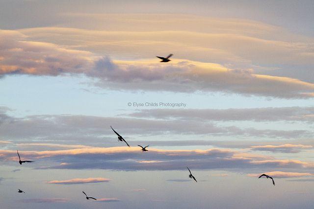 Soaring above Tauranga | © Elyse Childs Photography