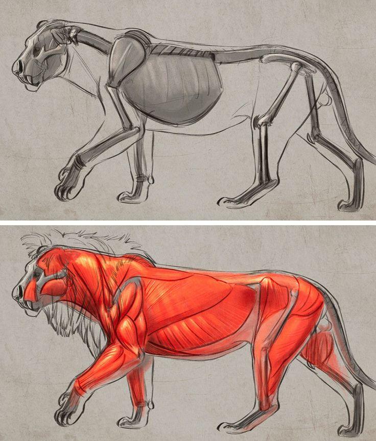 Анатомия животных в картинках онлайн