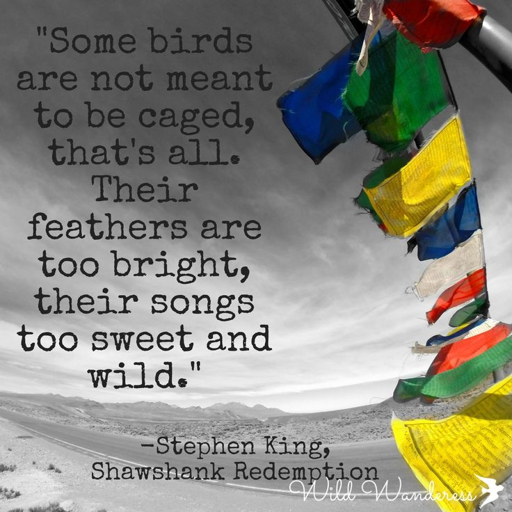 """""""Some birds are not meant to be caged, that's all. Their feathers are too bright, their songs too sweet and wild."""" Stephen King, Shawshank Redemption, Travel Quotes"""