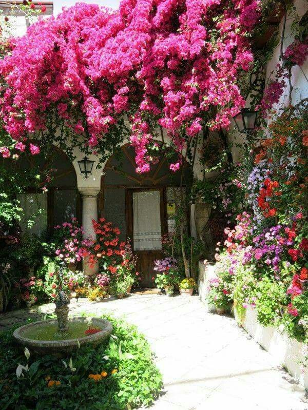 25 best ideas about planta bugambilia on pinterest for Plantas para patios