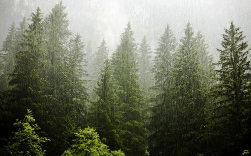 forest rainOregon, Forests Rain, Mountain, Wood, Trees, Earth, Places, Pine, Pacific Northwest