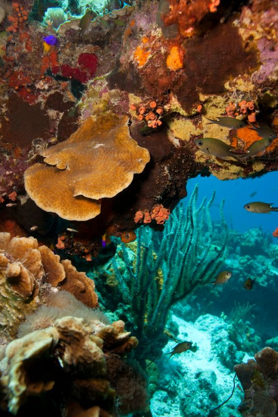 National Marine Park, Bonaire. Underwater exploration.