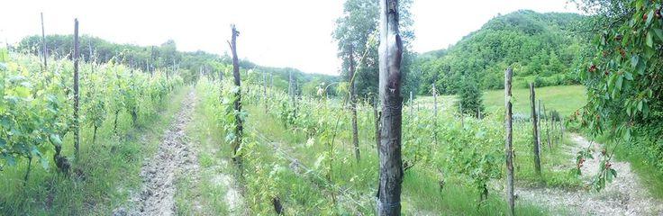 our wineyards www.tacchinovino.net