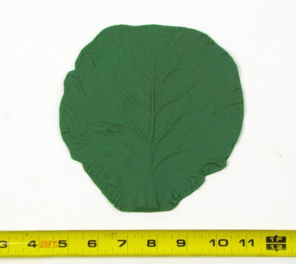 Small Cabbage Leaf