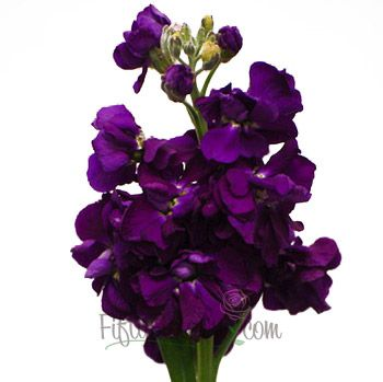 this is what we want. so pretty and PERFECT!! FiftyFlowers.com - El Aleli Purple Flower