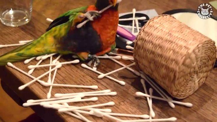 #Попугай  и палочки!   #Parrot and sticks!