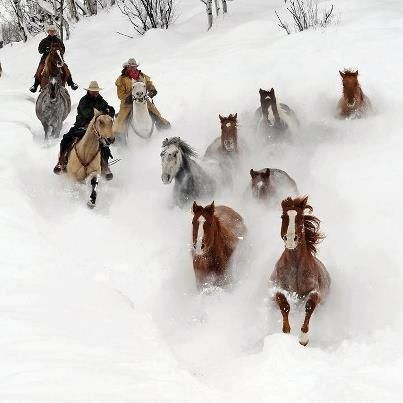 Bringing them home. #cowboys #horses`
