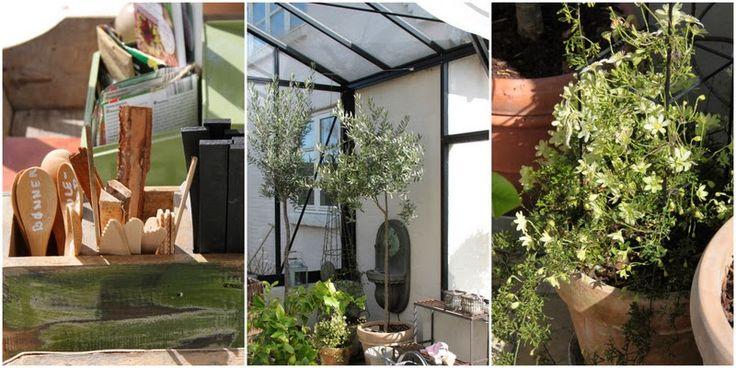 FORÅR I LENES VÆKSTHUS - Spring in the greenhouse