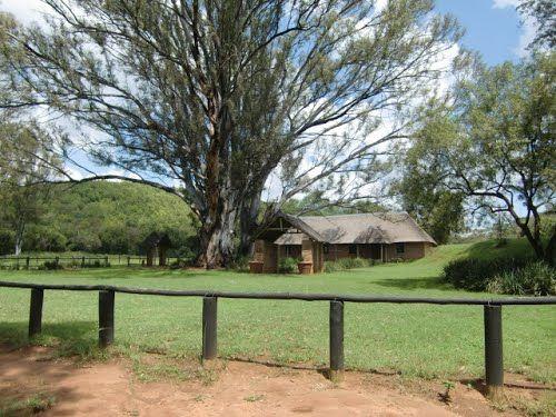 Kerkje op landgoed van Zebra Country Lodge met reusachtige boom (Trudi) Gauteng, Zuid-Afrika