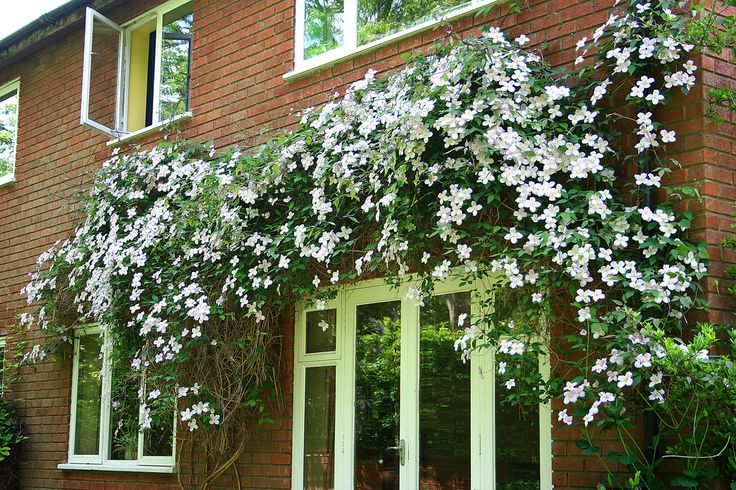Growing vines in the landscape is a great way to take advantage of vertical space and increase appeal, especially in areas with little or no space. Get more information on planting vines in this article.