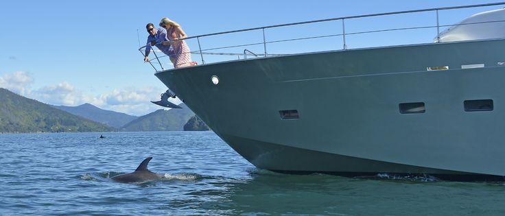 MV Tarquin | Luxury Marlborough Sound Cruise | New Zealand