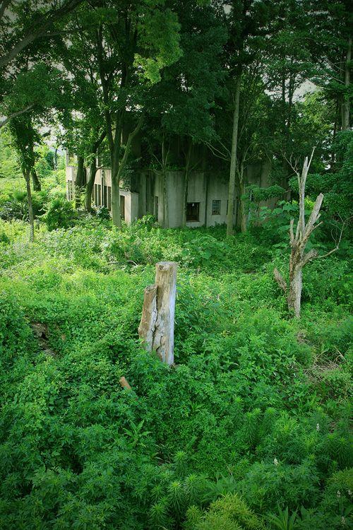 abandoned Mr.H's old house (Ibaraki, Japan) 旧H邸(茨城県) : 周囲は普通の住宅地ですが、ここだけは頑なまでに別世界を維持しています。