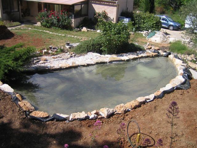 Les 25 meilleures id es de la cat gorie bassin carpe koi for Jardiland bassin poisson