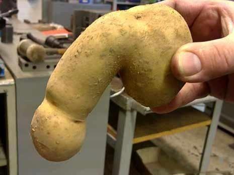 Potato Penis 105