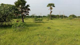 AGRI LANDS: CHEAP AGRICULTURAL LAND FOR SALE