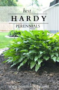 Not a gardener, but want your garden to look great? Try these Hardy Perennial Plants ~ The DIY Gardener's Guide - On Sutton Place #perennials #easytogrowplants #garden