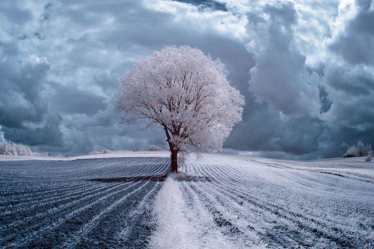 La Beauté majestueuse des Arbres en Pologne capturée par la Photographie infrarouge (5)