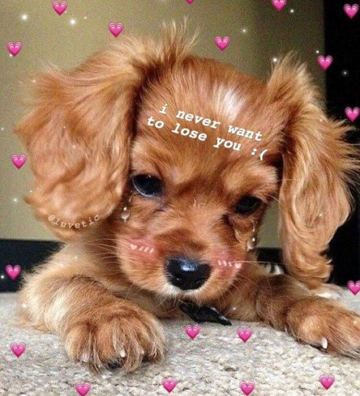 This Puppy Can Have My Whole Heart Cute Love Memes Wholesome