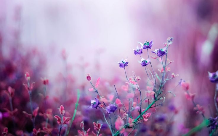 Meadow Flowers Wallpaper Free Download For Desktop & Mobile