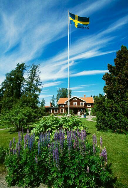 Summer in Sweden ❤