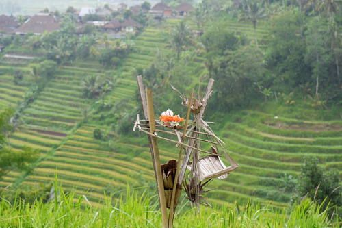 Cultural Landscape of Bali Province: the Subak System as a Manifestation of the Tri Hita Karana Philosophy  #guide #balithisweek