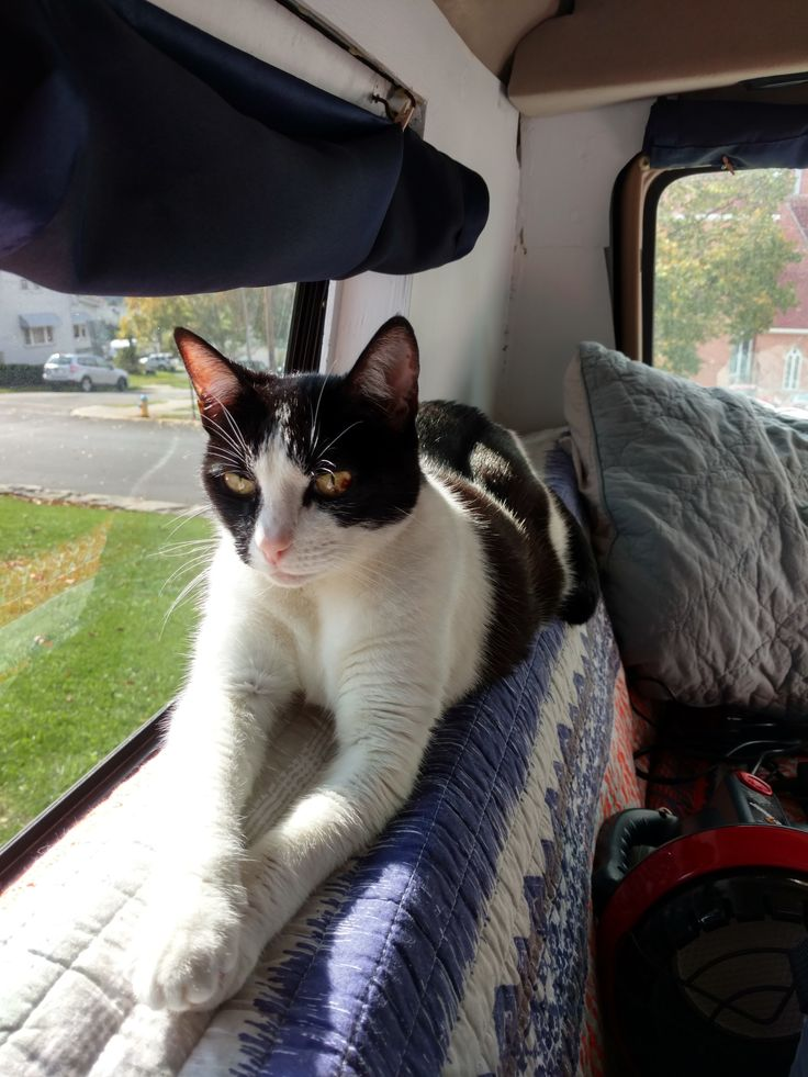 In June 2016, Lianna & Mark purchased a 2000 Dodge Ram Van, renovated the  interior to suit a full-time road tripping lifestyle and set out to explore  this beautiful country, all with their cat, Mazy, in tow.  As Lianna & Mark adjusted to vanlife, Mazy did too. But there are a few  thi