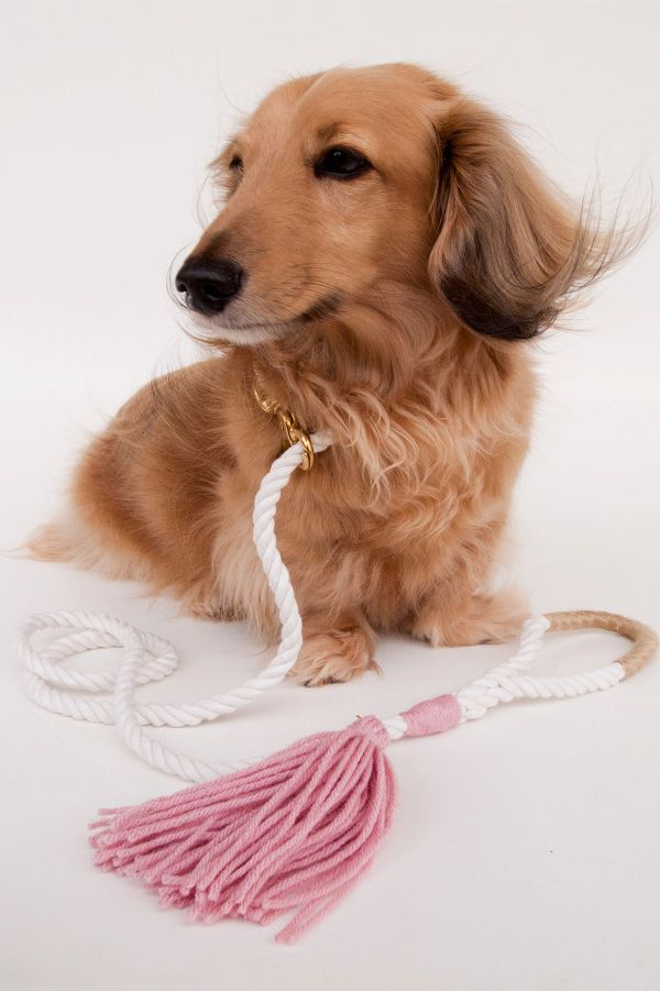 Wind in my fur. Fabulous rope leash. Life is good.