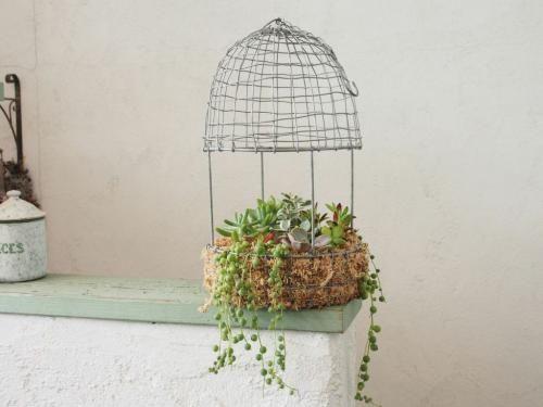 Cotoha -Plants & Antiques- / 多肉植物 鳥かご