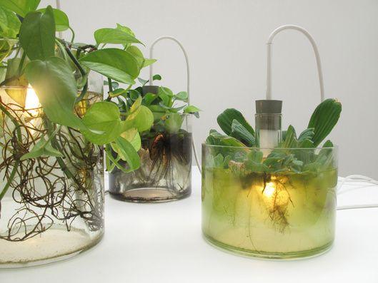 La diseñadora Miriam Aust ha conseguido un equilibrio perfecto, entre el diseño y la ecología, para crear una lámpara como macetero. Las plantas acuáticas crecen dentro de la base de la lámpara que…