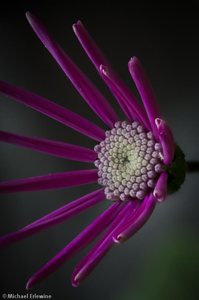 6f5e84c053140c10eb783538c182a90f  macro photography pretty flowers