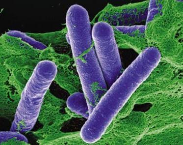 Clostridium botulinum bacteria -s