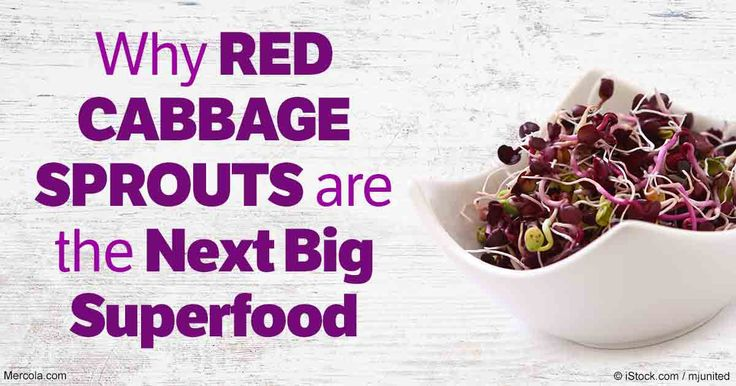 Red cabbage sprouts contain 40 times more vitamin E and six times more vitamin C than the same veggie that is a fully mature plant.