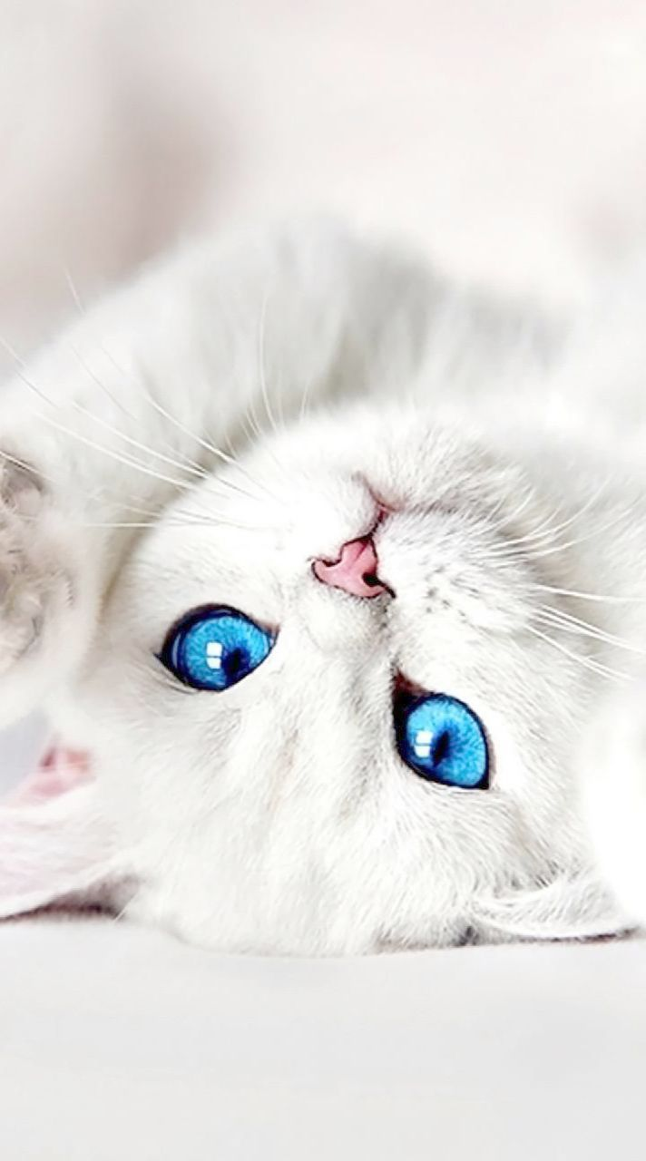 Pin By Jrspandora On Baby Animals Cute Cats Cute Cats And
